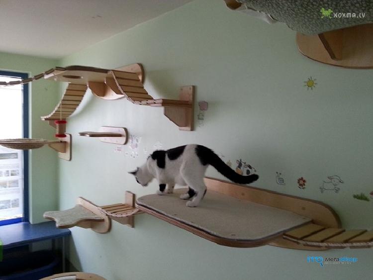 Представлен тренажер для кота - Mega Obzor